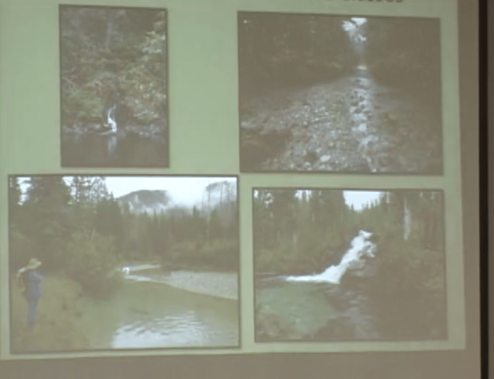 Sweetheart Lake Hydroelectric project, Terrestrial Botany – February 1, 2013
